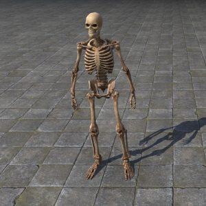 Target Skeleton, Humanoid