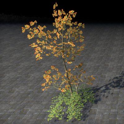 Sapling, Autumn Cluster