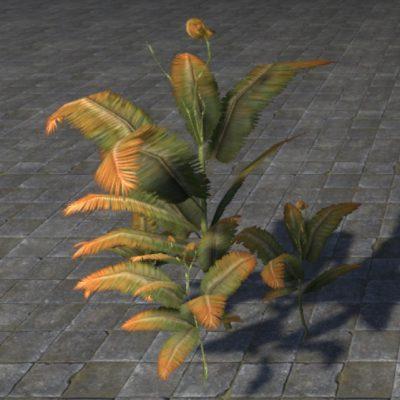 Fern Plant, Hardy