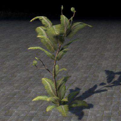 Fern Plant, Sturdy Towering
