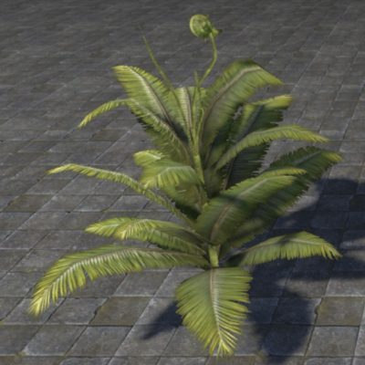 Fern Plant Vibrant