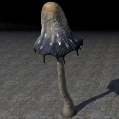 Mushroom, Lanky Erupted Stinkcap