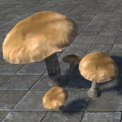 Mushrooms,Bruising Webcap