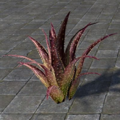 Plant, Red Aloe