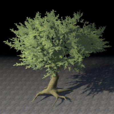Tree, Rooted Cedar