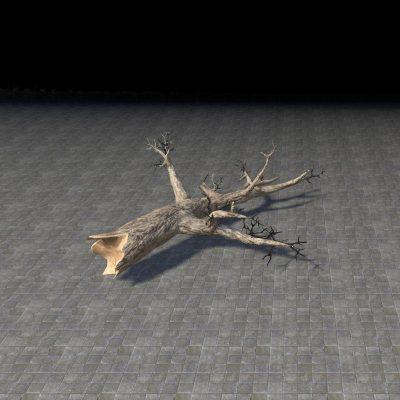 Log, Fallen Pine
