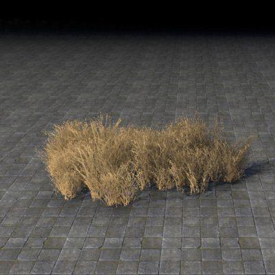 Desert Grass, Patch