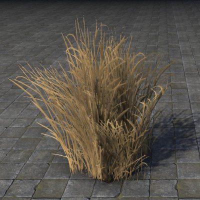 Desert Grass, Tall
