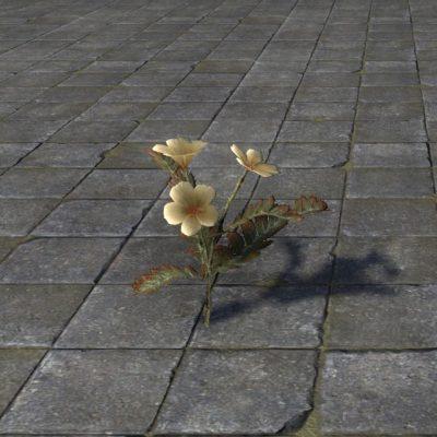 Flowers, Daedra Thorn