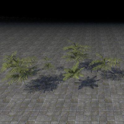 Plant Cluster, Keet Fern