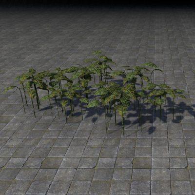 Plant, Tropical Bush