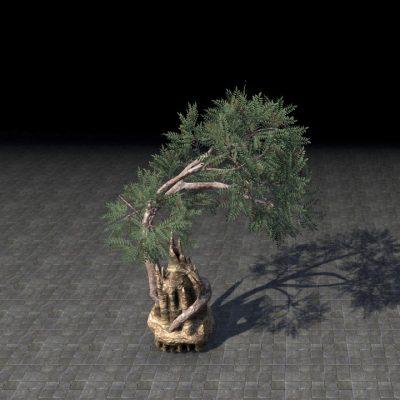 Tree, Engulfing Termite Mount