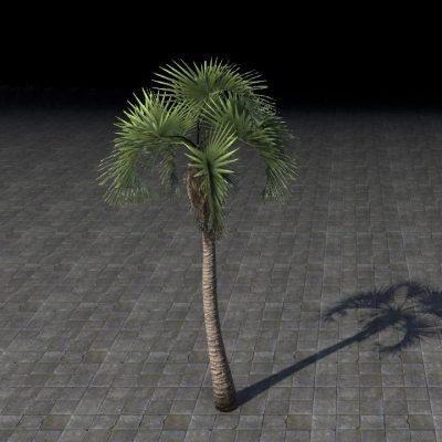 Tree, Fan Palm