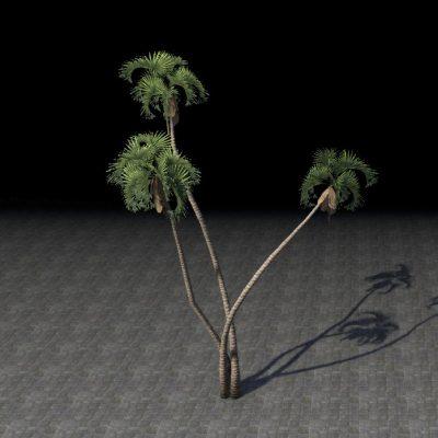 Trees, Fan Palm Cluster
