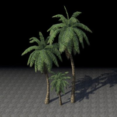 Trees, Shade Palm Cluster